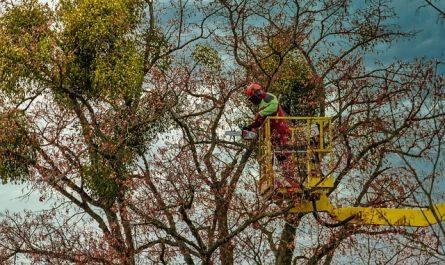 Comment réaliser l'élagage des arbres