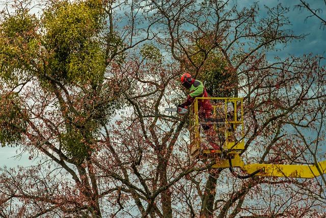 L'élagage d'un arbre : pour quelles raisons ?