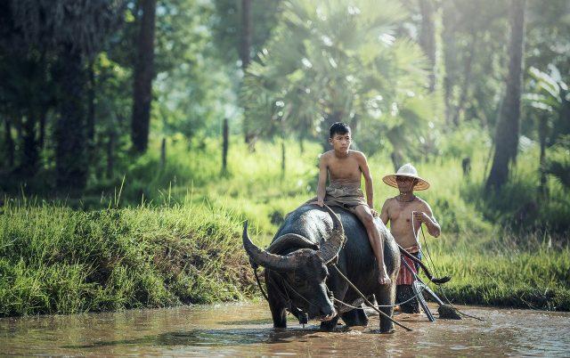 Conseils de voyage pour Indonésie